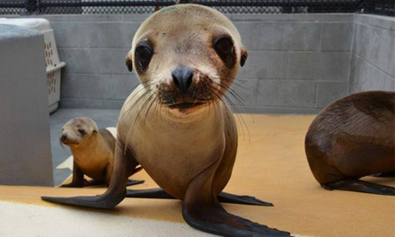 Basic Membership with Tour for Two or Four and Adopt-a-Seal at The Marine Mammal Center (Up to 52% Off)