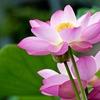 45% Off Flower Picking