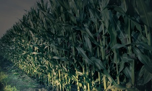Flashlight Corn-maze Visit For Two Or Four With Donuts And Cider At Westhaven Farm (40% Off)