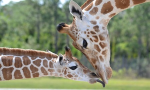 Lion Country Safari, Inc.: $21 for a Safari-Park Visit with Parking at Lion Country Safari (Up to $38 Value)