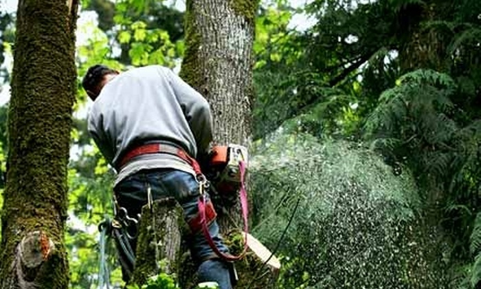 Adam's Pristine Acres - Fairfax: Tree-Removal Services or Flagstone Hardscapes from Adam's Pristine Acres