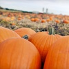 60% Off Family Pass to Pumpkin Patch in Liberty