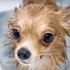 Up to 57% Off Pet Care Services in Bonita Springs