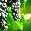 Half Off Group Wine Tastings in Hollister