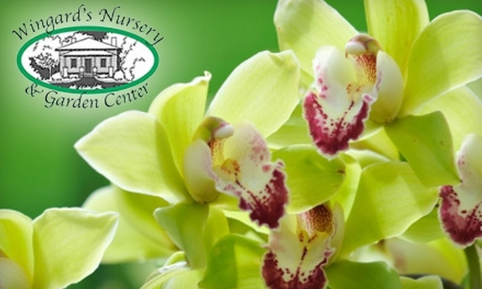 Wingard's Nursery and Garden Center - Lake Murray: $20 for $40 Worth of Plants, Gardening Accessories & More At Wingard's Nursery and Garden Center