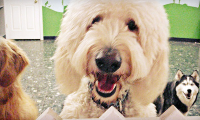 Happy Hounds - Prospect: One Dog Daycare Visit or Three Consecutive Nights of Dog Boarding at Happy Hounds in Prospect (Up to 53% Off)