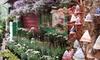 Jessica's Garden - Marlborough: $15 for $30 Worth of Trees, Shrubs, and Perennials at Jessica's Garden in Marlborough