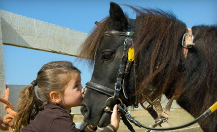 One 60-Minute Private Horse-RIding Lesson (a $50 value) - Blue Sky Stables in Boca Raton