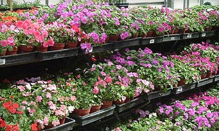 Cravens Nursery - Mantua: $10 for $20 Worth of Plants, Pottery, and Accessories at Cravens Nursery in Fairfax