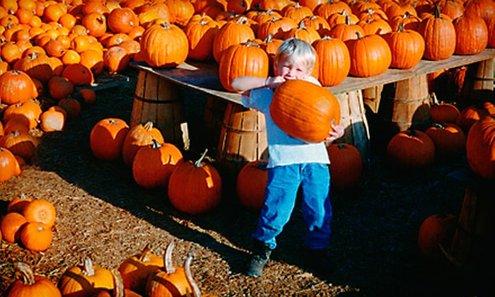 Toluca Lake Pumpkin Festival - Valley Village: Two or Four Tickets to Haunted Maze and Petting Zoo at Toluca Lake Pumpkin Festival in North Hollywood