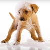 Up to 82% Off Dog Care at Miss Kitty's Bed & Bath