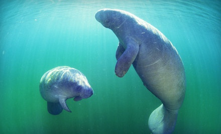 One Child Ticket to a Manatee Eco Tour (a $35 value) - Double R's Fishing and Tours Company in Naples