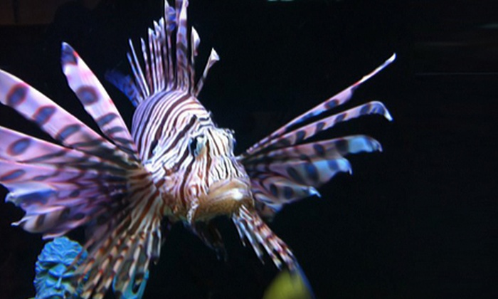 Atlantis Tropical Fish - Summerlin: Aquarium Supplies or Fish at Atlantis Tropical Fish (Half Off)