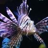 Half Off Fish & Aquarium Supplies