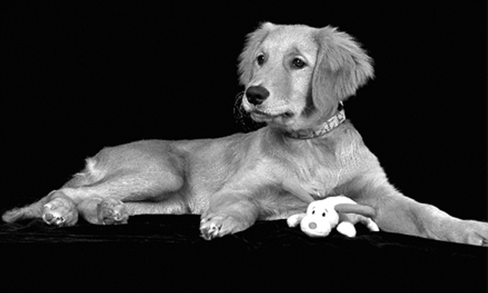 """Petfolios - Allentown / Reading: $55 for a One-Hour On-Location Pet Photo Shoot and Two 8""""x10"""" Prints from Petfolios ($125 Value)"""