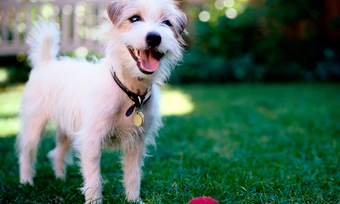 Bliss Pet Resort and Spa - Prosper: Five Days of Luxury Dog Boarding or Doggy Daycare (Up to Half Off)