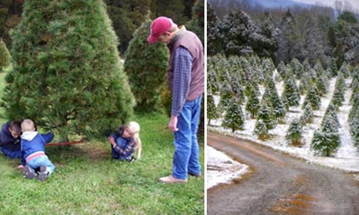House Mountain Christmas Tree Farm - 8: $15 for $30 Toward any Tree at House Mountain Christmas Tree Farm