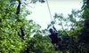 Eco Zipline Tours - Danville: $44 for The Easy Rider Zip-Line Tour for Two from Eco Zipline Tours in New Florence ($86.38 Value)