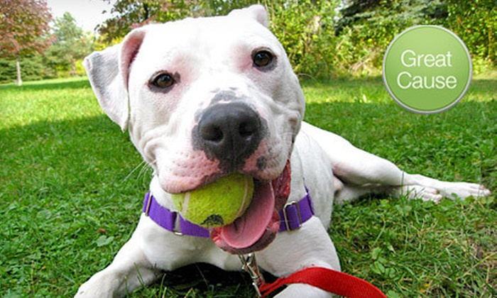 Dane County Humane Society: $10 Donation to Help Provide Toys for Animals