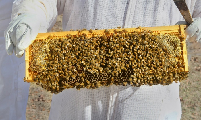 Round Rock Honey - Rowlett: Three-Hour Introductory Beekeeping Class for One or Two at Round Rock Honey (Up to 68% Off)