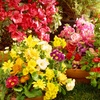52% Off Flower-of-the-Month-Club Membership
