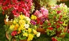 Maryland Heights Florist - Maryland Heights: $29 for a Six-Month Membership to the Flower-of-the-Month Club from Maryland Heights Florist ($60 Value)