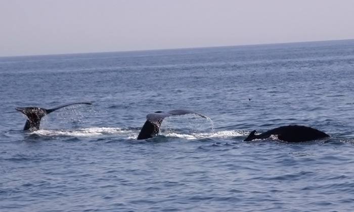 Provincetown Whale Watching - Multiple Locations: $30 for a Whale-Watching Tour for One Adult from Provincetown Whale Watching ($42 Value)
