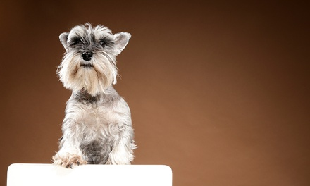 Pet and Family Photoshoot with Prints and Refreshments at The Factory Covent Garden (90% Off) (London)