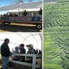 Half Off Admission to Corn Maze