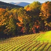 Up to 56% Off Winery Tour in Dahlonega