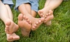 Utah Lawn Aeration: $59 for Aeration, Fertilization, and Soil Analysis from Utah Lawn Aeration ($118.70 Value)