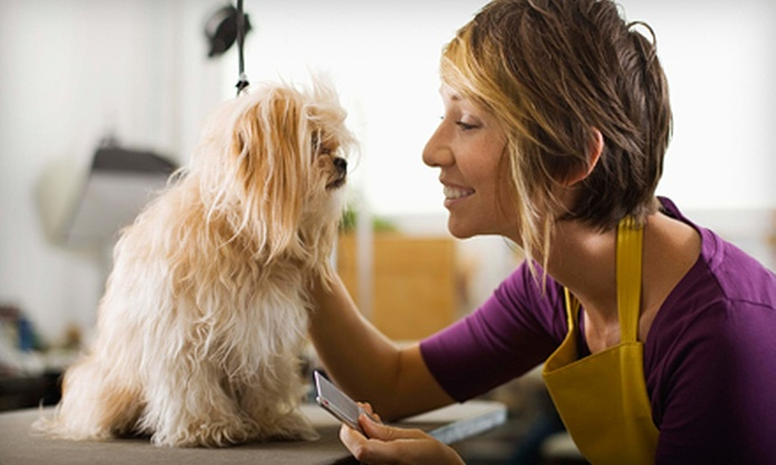 Dirty Dawgz - Plano: Two Self-Serve Dog-Washing Packages or $20 for $40 Worth of Grooming Services at Dirty Dawgz