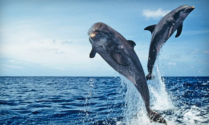 Adventure Harbor Tours - Mount Pleasant: 90-Minute Charleston Harbor Sunset Dolphin Cruise for Two or Four from Adventure Harbor Tours (Up to 57% Off)
