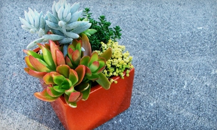 Living Arrangements: $25 for $50 Worth of Succulents from Living Arrangements