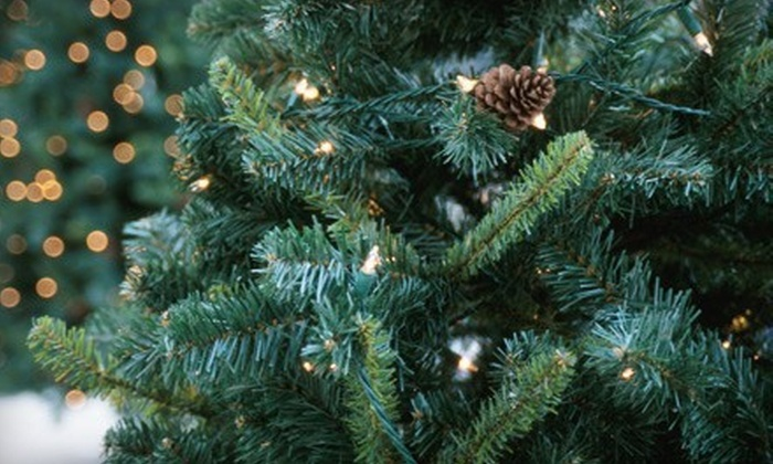 Victorian Tree Ranch - Sebastopol: $40 for a 6- to 8-Foot Pre-Cut Noble Fir at Victorian Tree Ranch ($80 Value)
