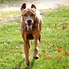 Up to 73% Off at Shaggy Pines Dog Park