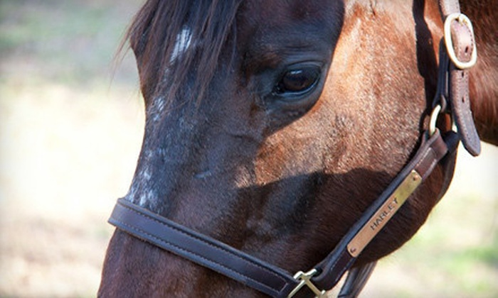 Inspired Riding - Smithville: One 90-Minute Horseback-Riding Lesson or Three One-Hour Private Lessons at Inspired Riding in Smithville (Up to 54% Off)