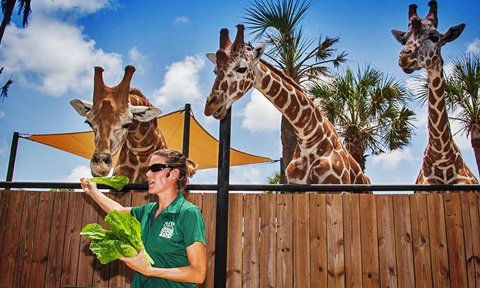 Naples Zoo at Caribbean Gardens - Naples Zoo at Caribbean Gardens: One-Year Individual or Family or Grandparent Membership to Naples Zoo at Caribbean Gardens (Up to 50% Off)