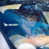 51% Off On-Location Windshield-Chip Repairs