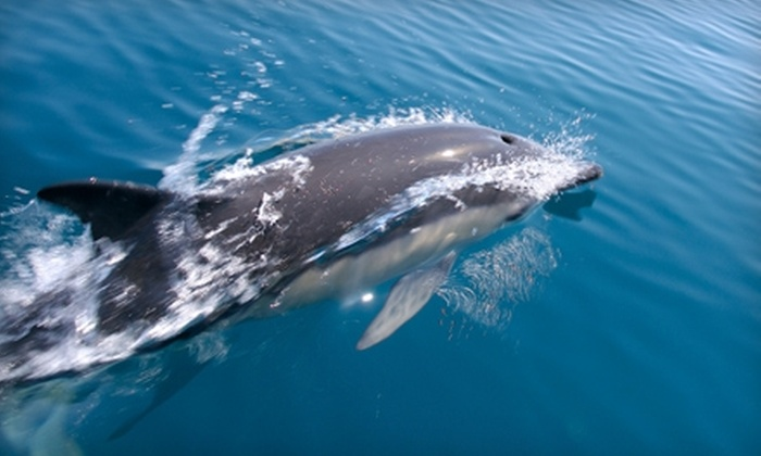 Atlantic City Cruises - Atlantic City: $17 for One Ticket to Two-Hour Dolphin Watching Adventure Cruise at Atlantic City Cruises ($34 Value). Choose Between Two Options.