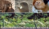 Arizona-Sonora Desert Museum - Marana: $12 for Two Adult Admission Tickets to the Arizona-Sonora Desert Museum (Up to $29 Value) in Tucson