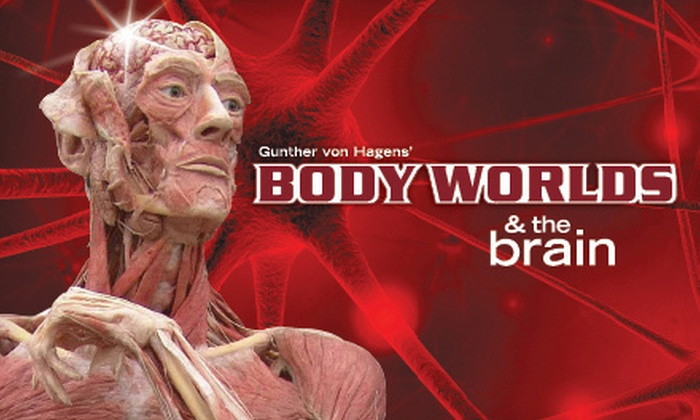 "COSI - Columbus: $25 for Two to See ""BODY WORLDS & The Brain"" at the Center of Science and Industry (Up to $49.90 Value)"