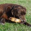 Smoked Pig's-Foot Dog Chew