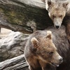 Up to 53% Off Wildlife-Center Tour in Portage