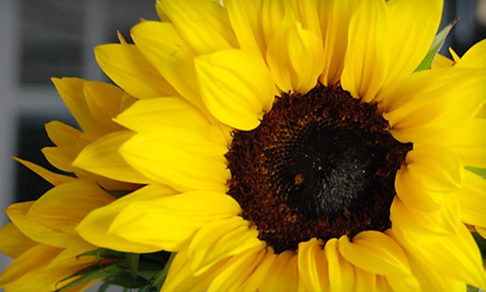 Bloomsberry Flowers - Wilmington: $15 for $30 Worth of Floral Arrangements at Bloomsberry Flowers