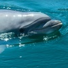 Up to Half Off Dolphin Tour in Clearwater Beach