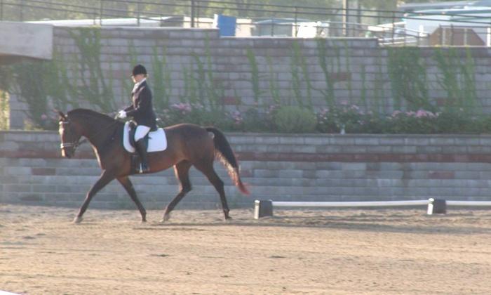 Alchemy Equestrian - Alchemy Equestrian: $60 for Four Horseback Riding Lessons ( $140 Value)— Alchemy Equestrian