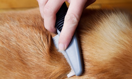 Veterinary Consultation and Grooming for a Cat or Dog at Happy Valley Veterinary Hospital (Up to 64% Off). Four Options.