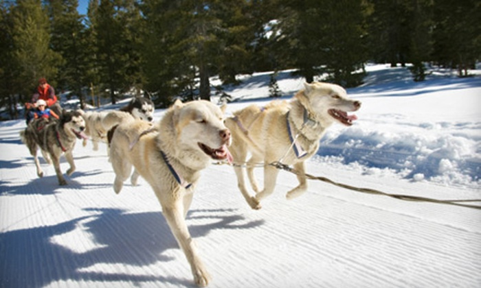 Chugach Express - Alyeska: $189 for a Dogsled Tour for Two at Chugach Express in Girdwood ($378 Value)