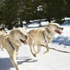Half Off Dogsled Tour for Two in Girdwood